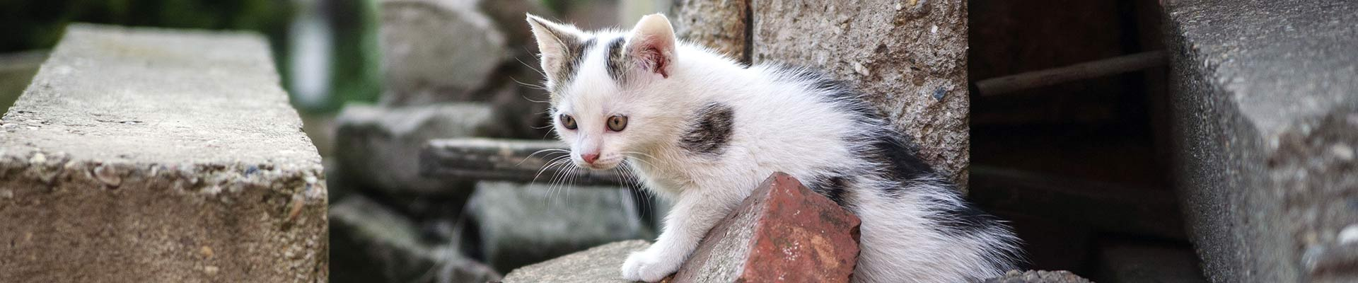 Kitten wandering outdoors