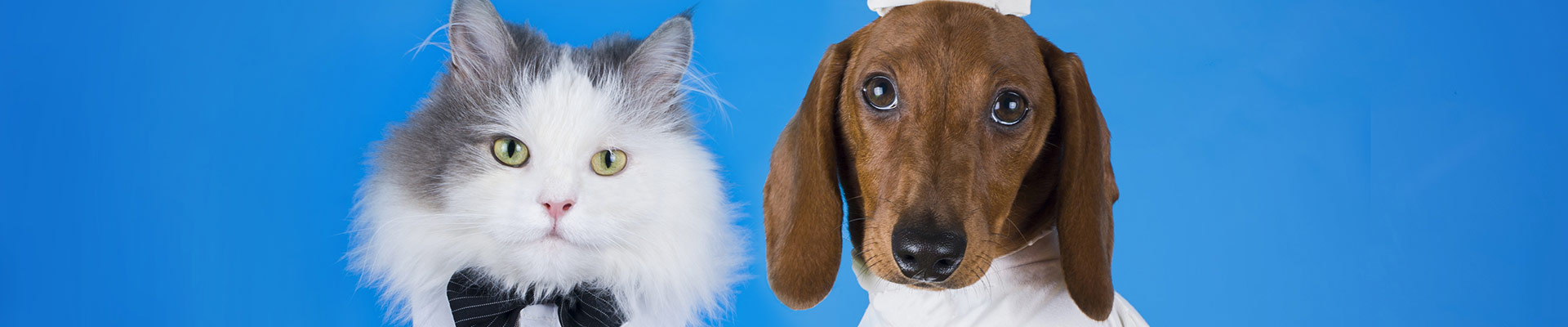 Dog and cat dressed up for event