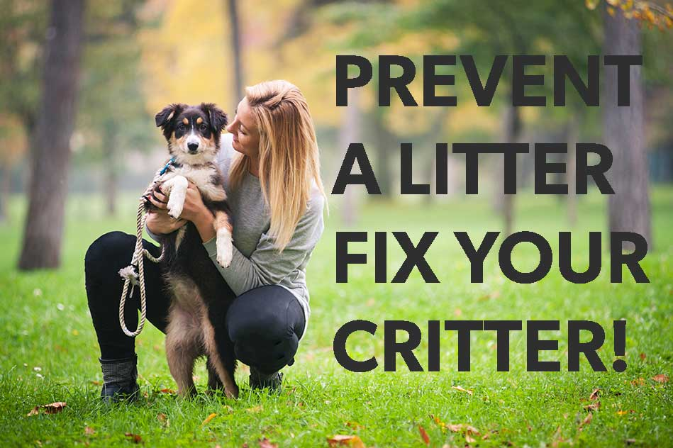 Prevent a litter homepage hero mobile version