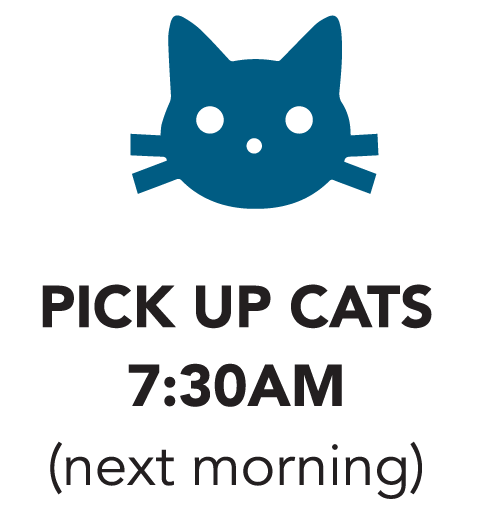 Pick up cats icon