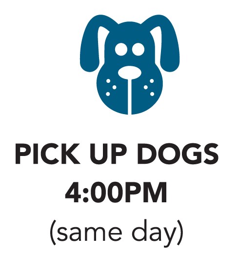 Pick up Dogs icon