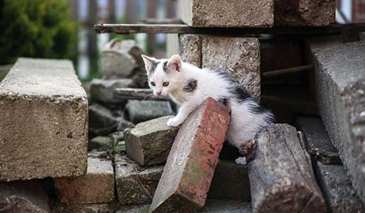 Feral cat outdoors image
