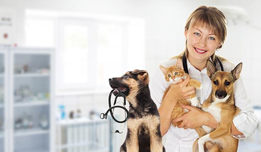 Puppies and kitten at the vet