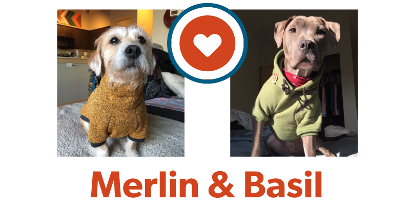 Merlin&Basil