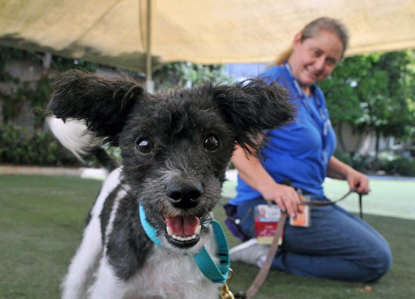 companion-animal-volunteers