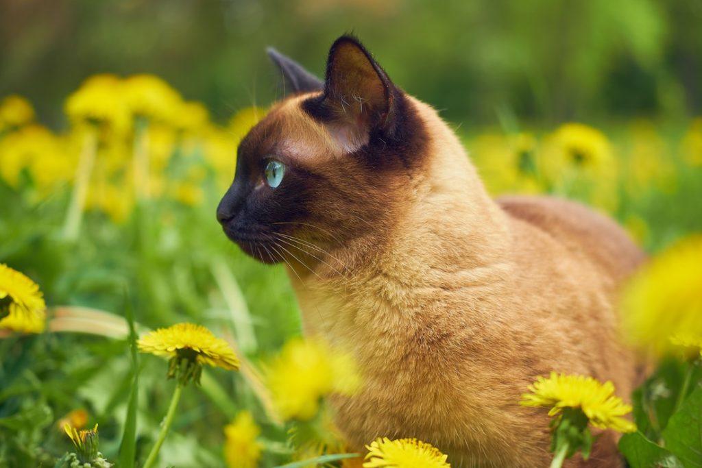 photo-of-cat-in-a-flower-field-1208938