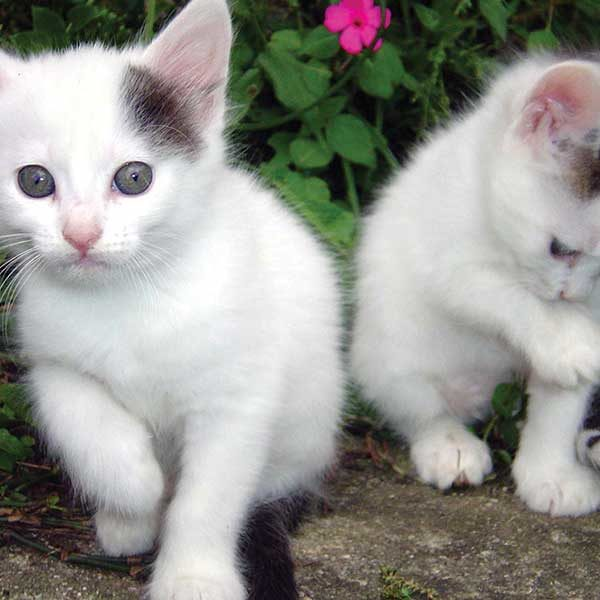 Kittens in the garden portrait